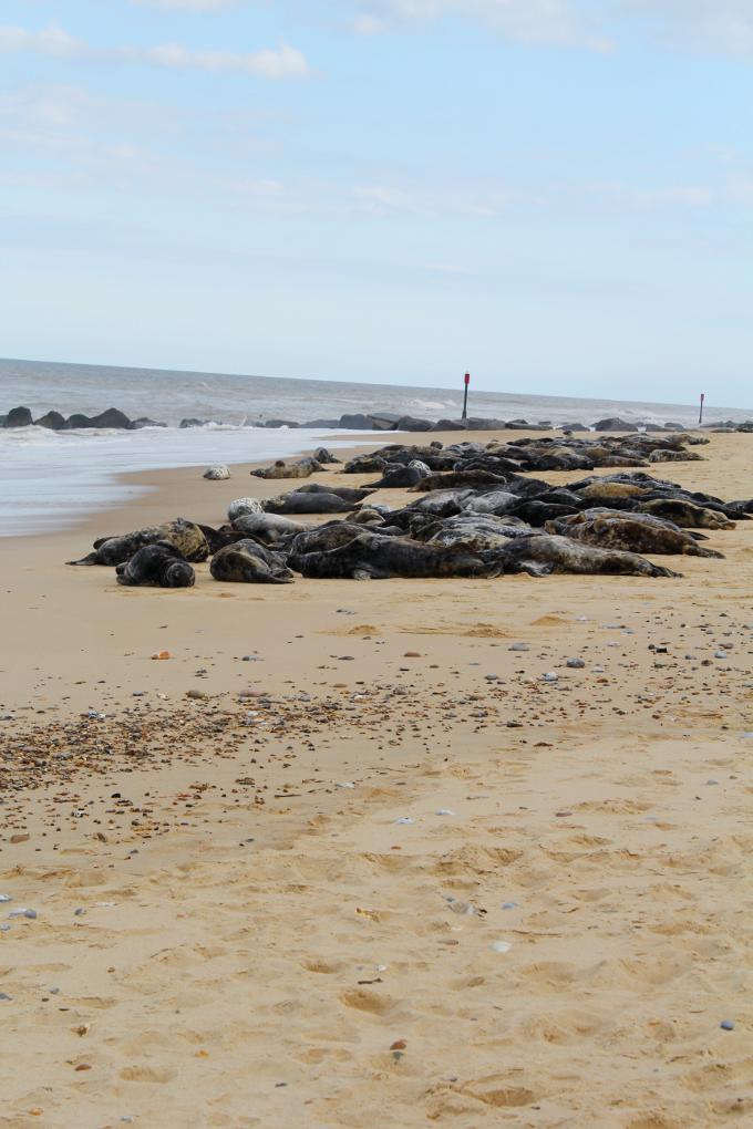 Horsey Beach, Suffolk - The Wayfarer
