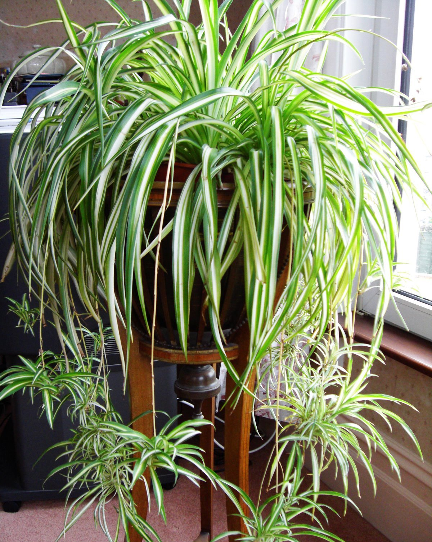 Les Filles De L Air Plante 12 plantes qui peuvent survivre même dans le coin le plus sombre