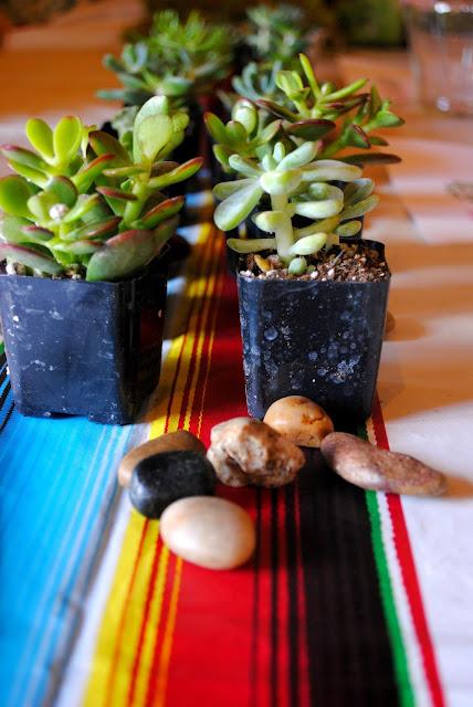 Succulents- Workshop- Succulent-Garden