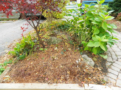Toronto Fall Cleanup by Paul Jung Gardening Services--a Lawrence and Yonge Front Yard after