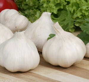 powerful health benefits of garlic