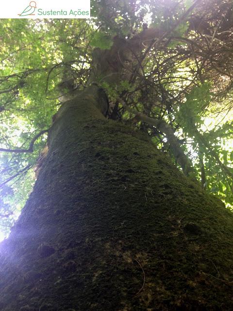 Ponto de vista de um abraço com a árvore