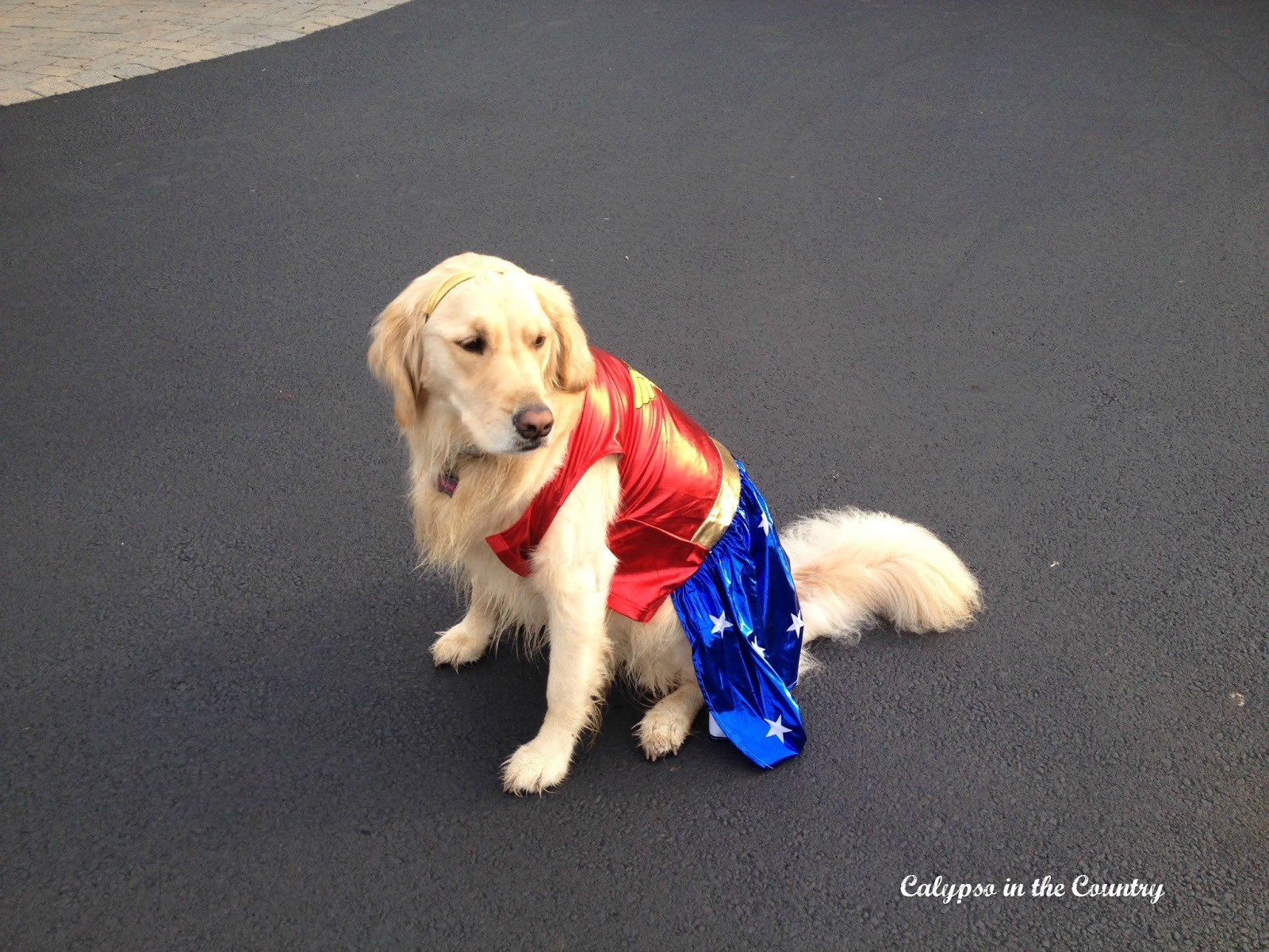 Halloween Costumes for Dogs | Calypso In The Country
