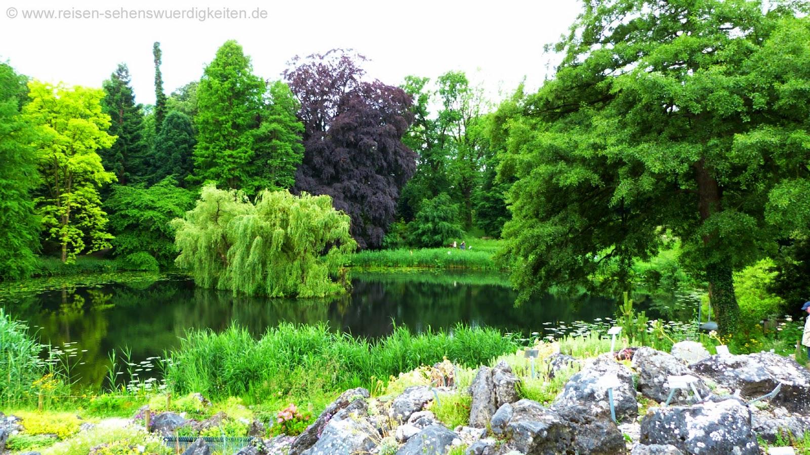 Teich im Botanischen Garten von Münster