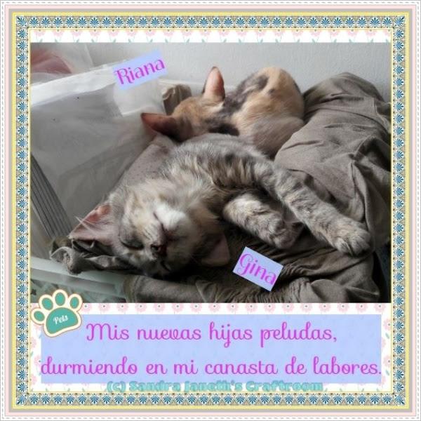 Gatos, Riana, Gina
