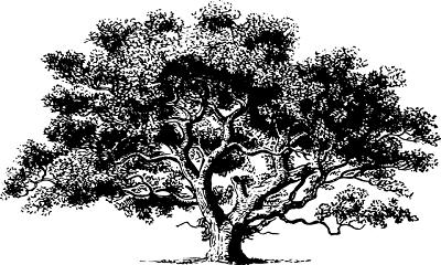 cara menggambar pohon tes psikotes