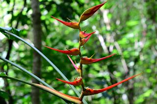 Wild Plantain Flower