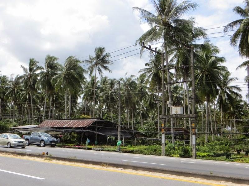 Обилия пальм