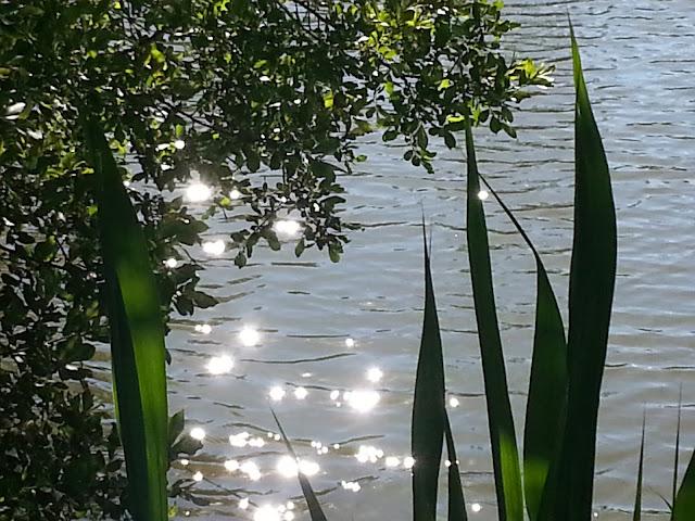 Sunlight on Lake