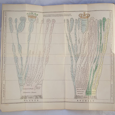 1840 FIRST EDITION ELEMENTARY GEOLOGY BY EDWARD HITCHCOCK ~ EVOLUTION (PREDATES CHARLES DARWIN'S 1859 ON THE ORIGIN OF SPECIES) ~ PALEONTOLOGY ~ DINOSAUR FOSSILS ~ HAND COLORED EVOLUTIONARY CHART
