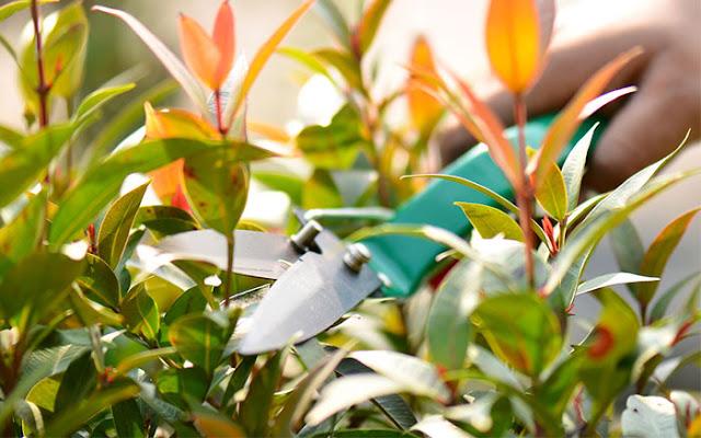 Tree-pruning-Perth