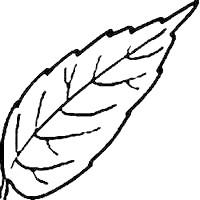 amavlis bijoux desenhos colorir flores pétalas e folhas