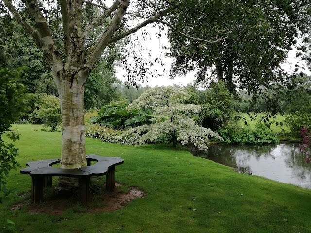 staw, ławka wokół drzewa