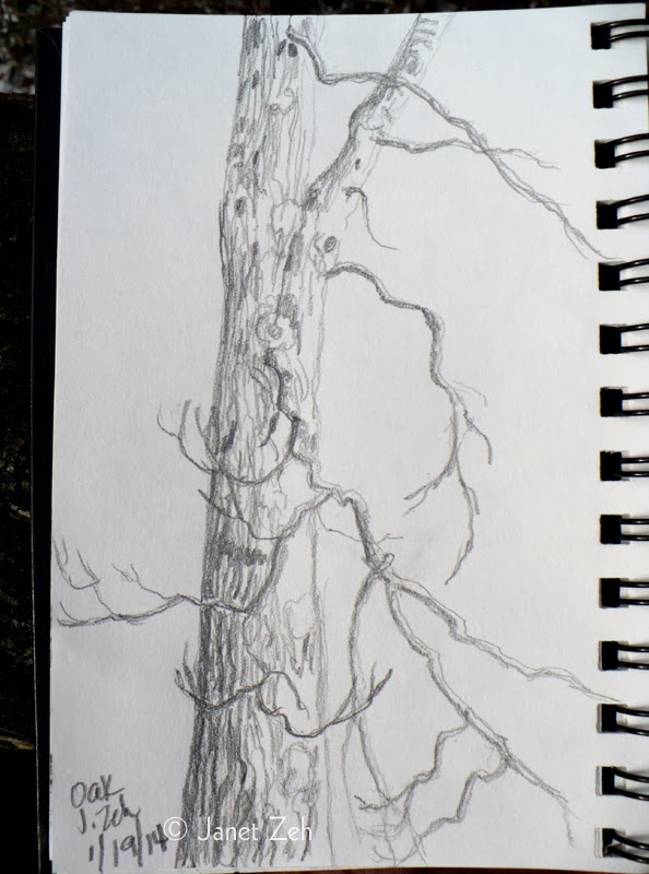 Oak tree in winter pencil sketch