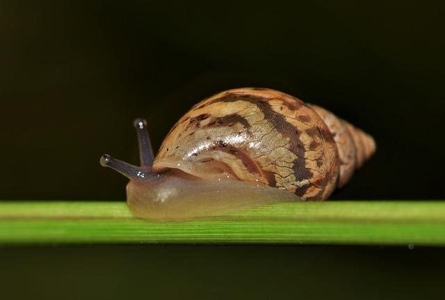 Cone-shells