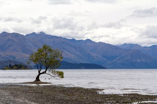 Danau Wanaka, Selandia Baru