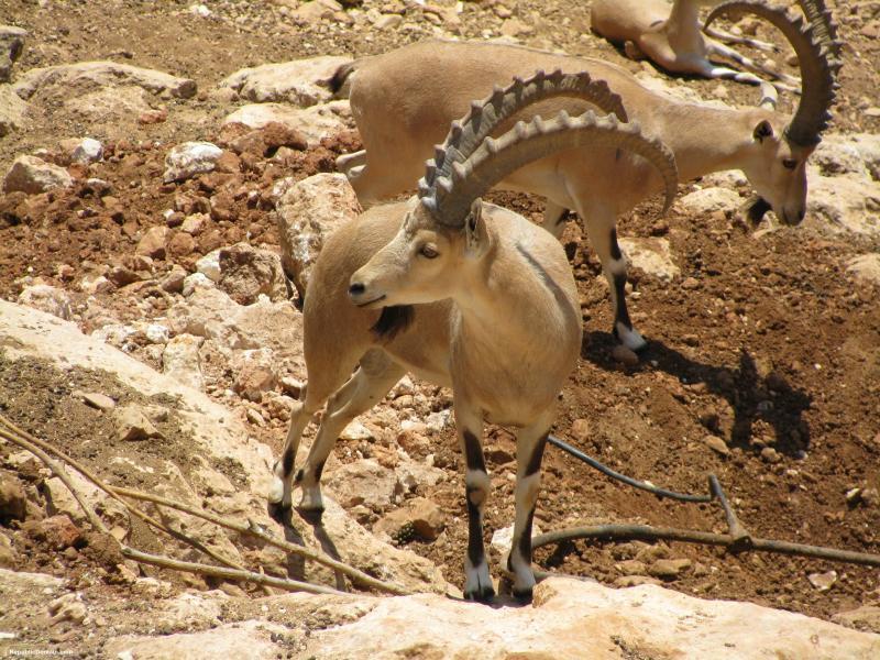 الحيوانات المهددة بالانقراض في المملكة العربية السعودية بالصور ثقف حياتك