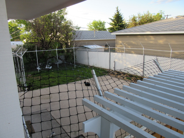 Cat Fence Made From Pvc Pipe June 2015