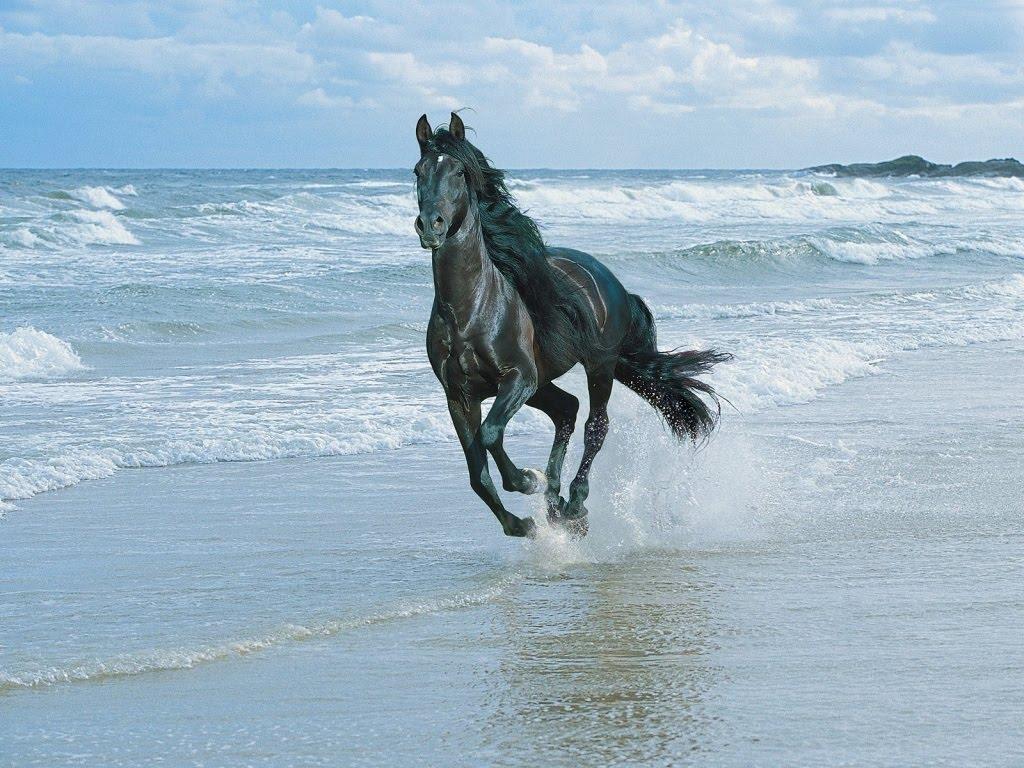 3d horse wallpa...
