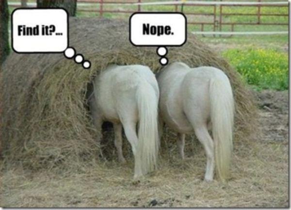 30 Funny animal captions - part 10 (30 pics) | Amazing ...