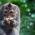 Suaka Hutan Monyet Ubud yang sakral di Bali