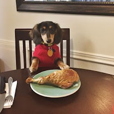 A Doxie's View Of Thanksgiving