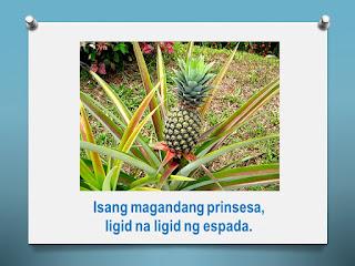 Bugtong Na May Larawan At Sagot My Philippines