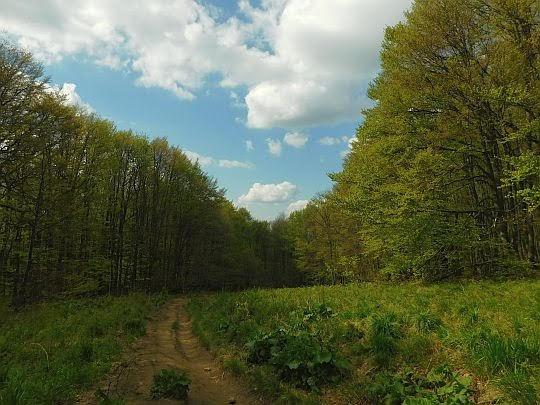 Wejście do lasu.