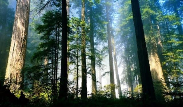 Hutan merupakan karunia Allah SWT yang patut untuk kita jaga dari tangan insan yang Jahi Gobekasi:  Pengertian Hutan, Jenis-Jenis Hutan dan Manfaat