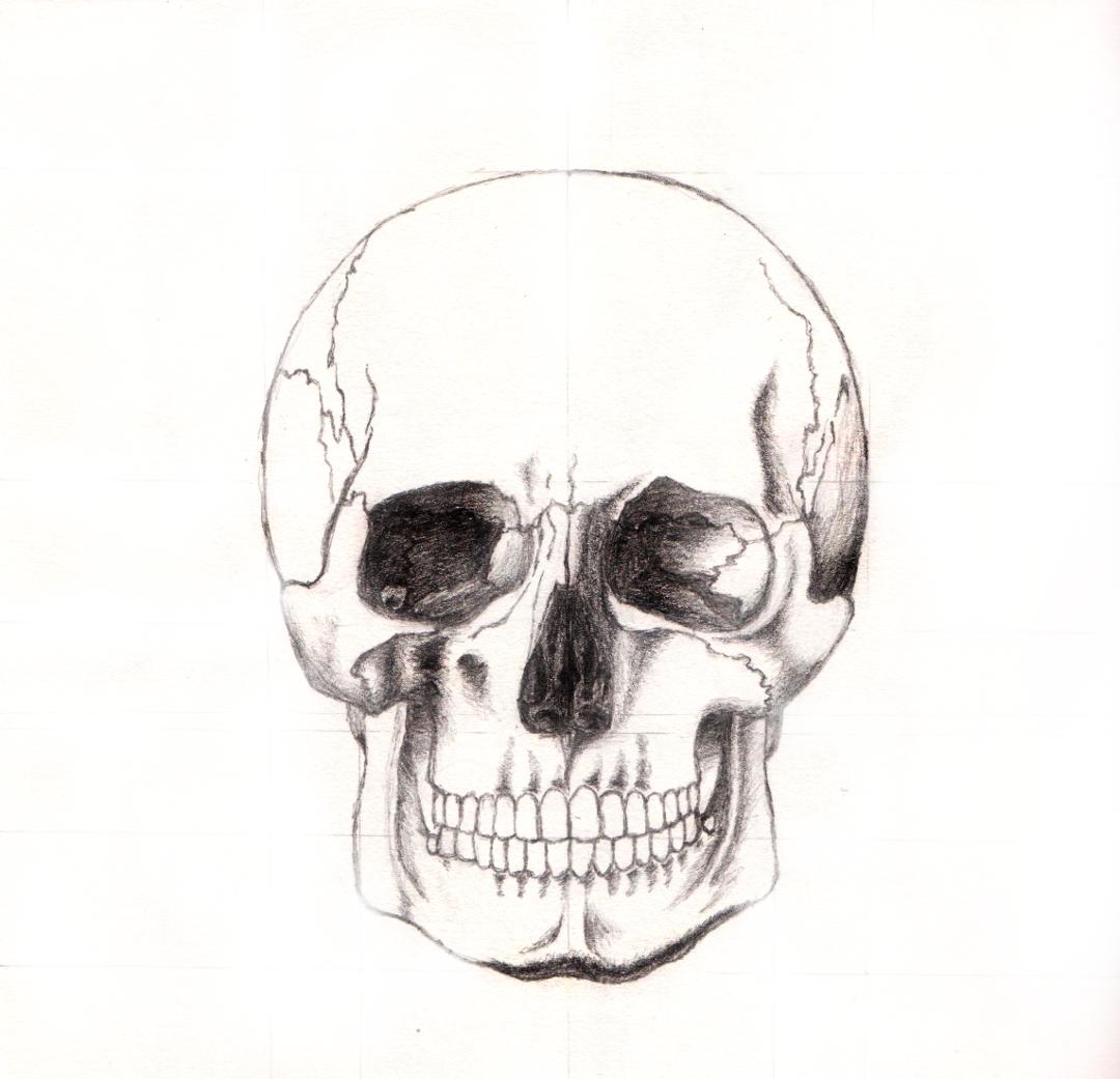 Easy Human Skull Drawing
