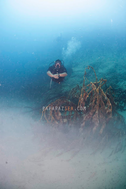 Scuba Diving, Underwater Photography, Philippines, PaparazSea