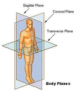 Body Planes in Anatomy