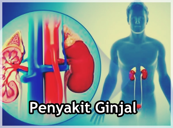 Info Seputar Penyakit Ginjal