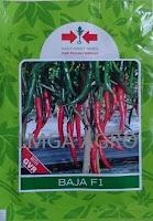 Cabai F1 Baja,Cabai Besar Hibrida,Panah Merah,LMGA AGRO