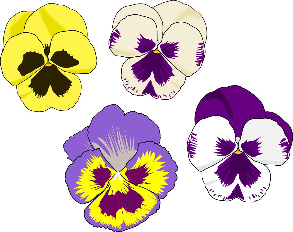 pansy flower drawing - photo #9