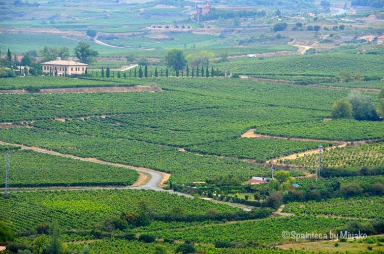 Viñedos en España 北スペイン 緑のカーペットのような景色が広がるリオハの葡萄畑