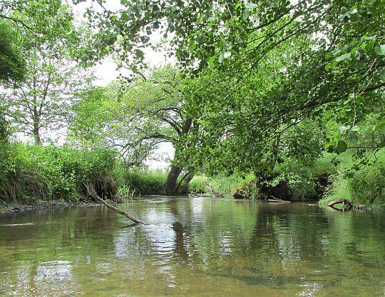 Rzeka Wieprz, spływ kajakowy.