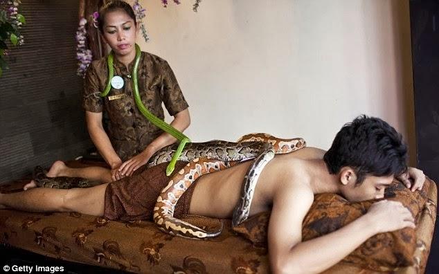 spa python snakes body massage