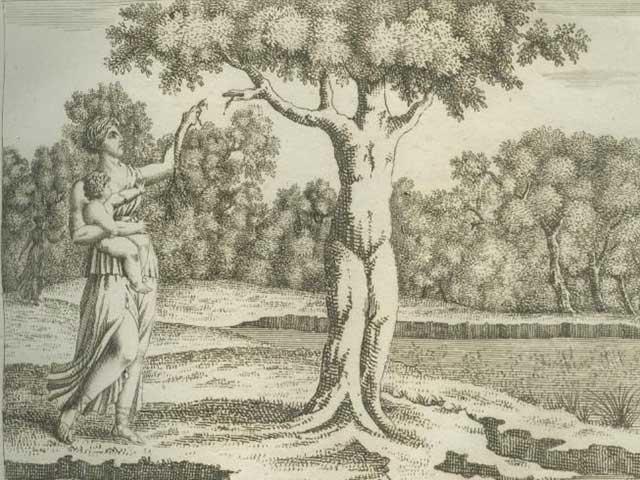 Pohon Teratai