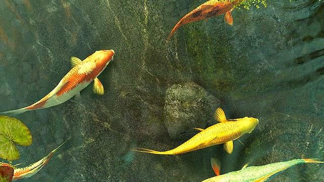 64 Animasi Bergerak Wallpaper Ikan Hidup Gratis Cikimm Com