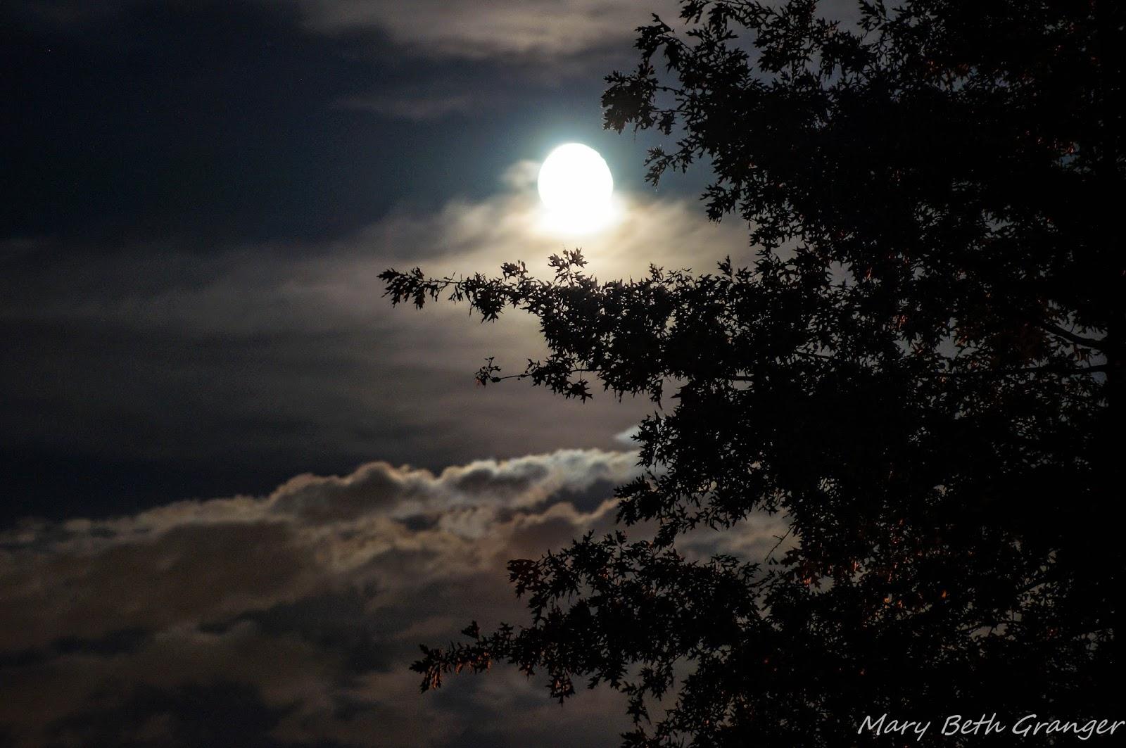 full moon photography tips - photo #38