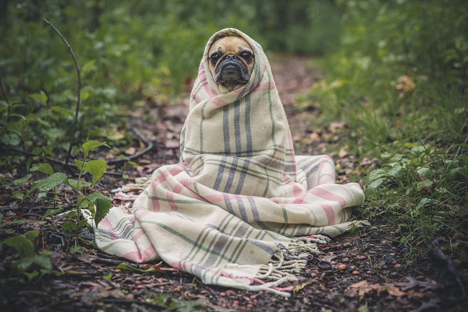 Infekcje jesienne u psa