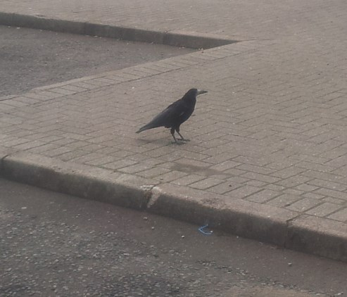 Whoopidooings: Crow at Scottish Service Station