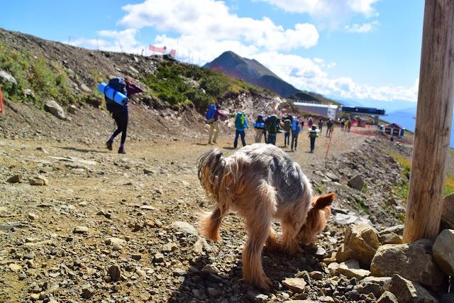 Футник, собака в горах