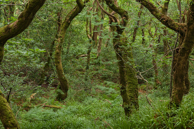 Exmoor woodland at Culbone on the coastal path from Porlock by Martyn Ferry Photography