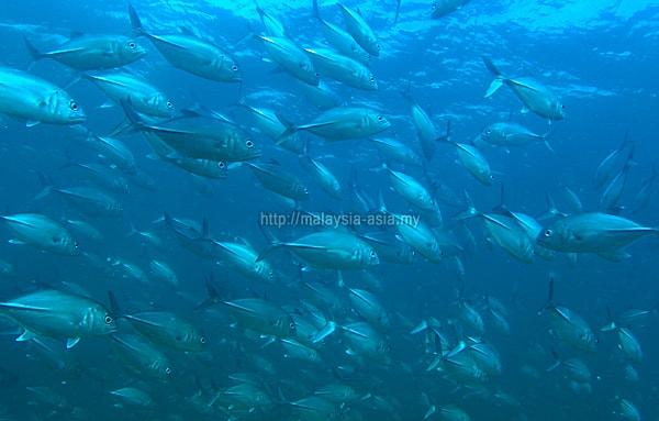 Miri Scuba Diving