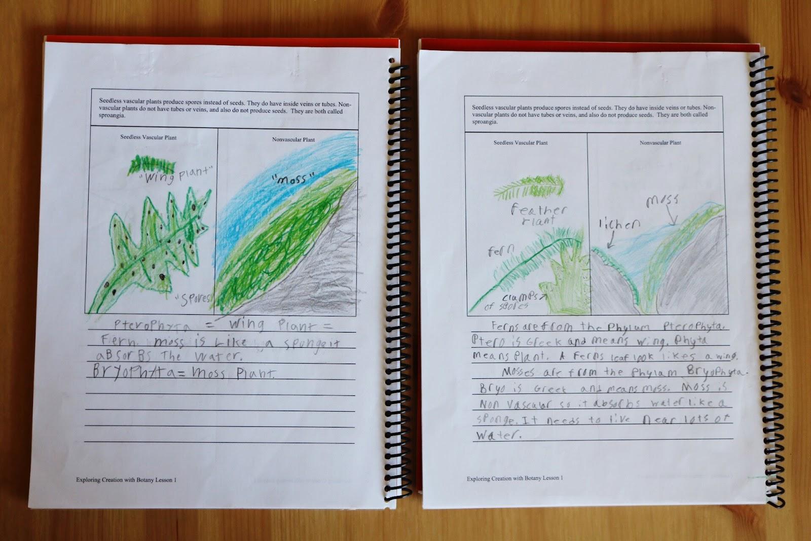 Botany Lab Report