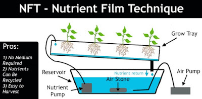 How to Hydroponic NFT System (Nutrient Film Technique)