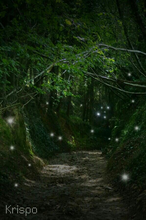 sendero en bosque con destellos