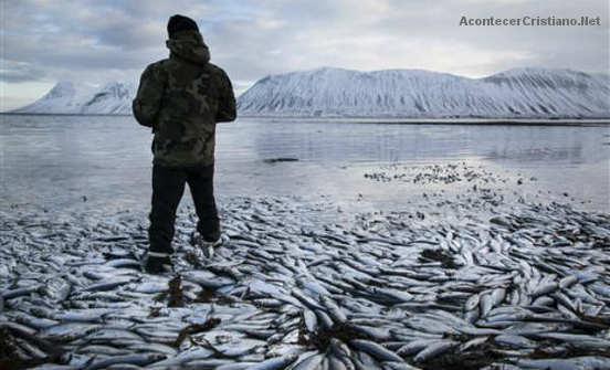 Miles de peces muertos en Islandia